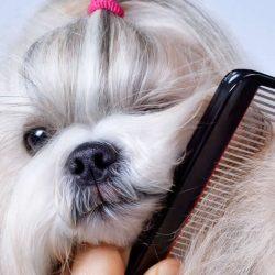 grooming-top